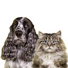 Puhtus koera- ja kassiomanikele